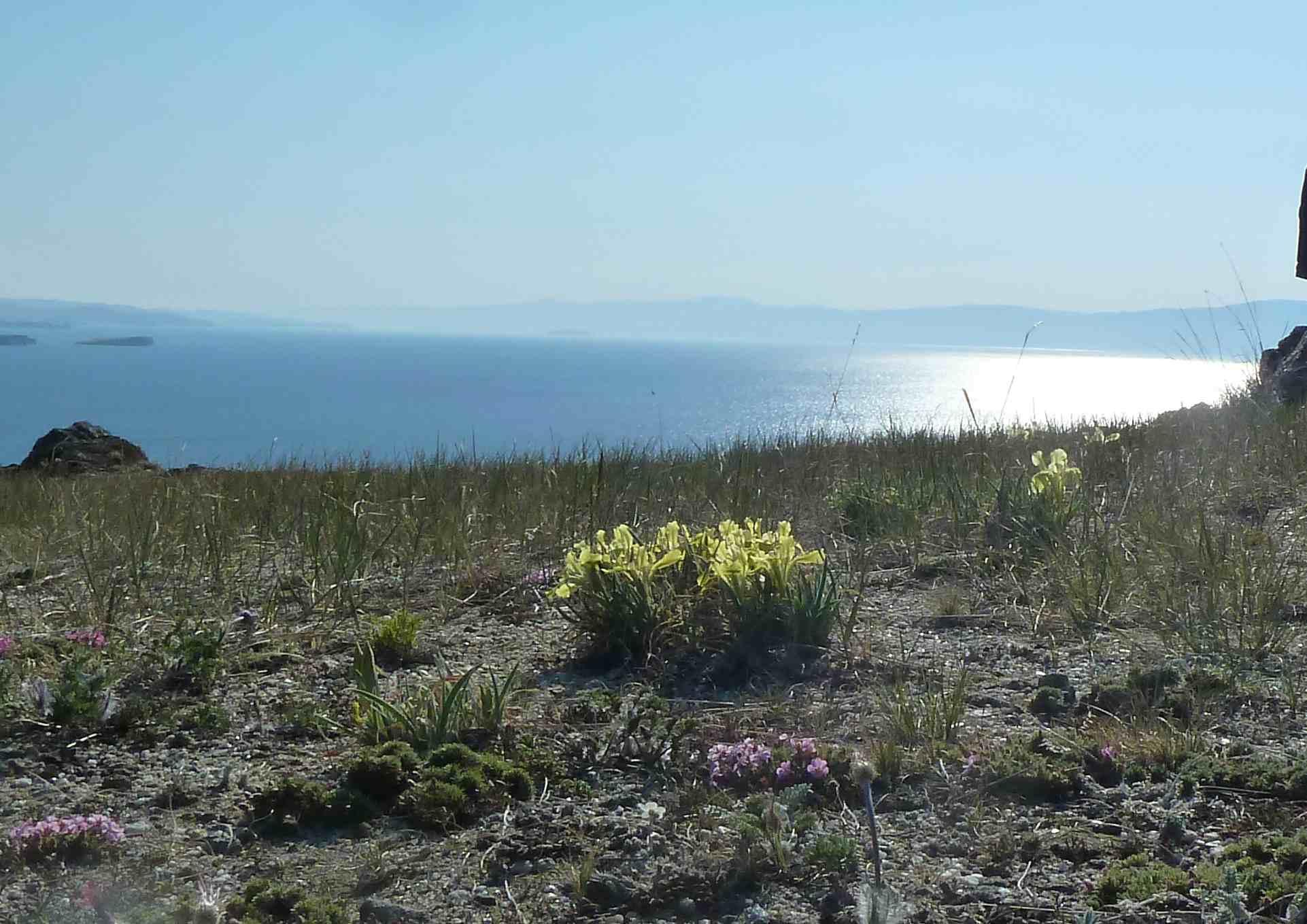 Frühlingsblumen am Baikalsee